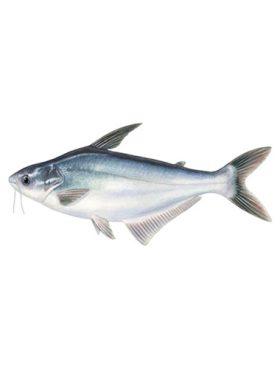 THAI Frozen Ikan Patin 1kg